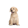 Dino Puppy - Premium hrana za pasje mladičke